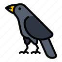 crow, bird, black, animal, raven, wild, feather