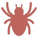 bug, halloween, insect, spider, spiderweb, web icon