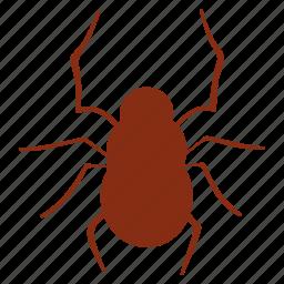 bug, halloween, insect, spider, spiderweb, web icon
