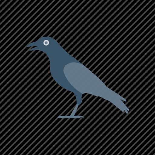 bird, blackbird, crow, fly icon