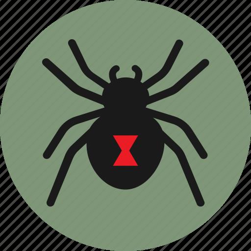 arachnid, black widow, bug, insect, spider icon