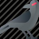 animal, bird, crow, halloween, scary icon