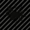 bug, cobweb, evil, ghost, halloween, net, spider