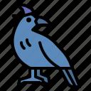 crow, bird, raven, fear, spooky
