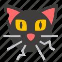 cat, halloween