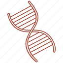 acid, deoxyribonucleic, dna icon