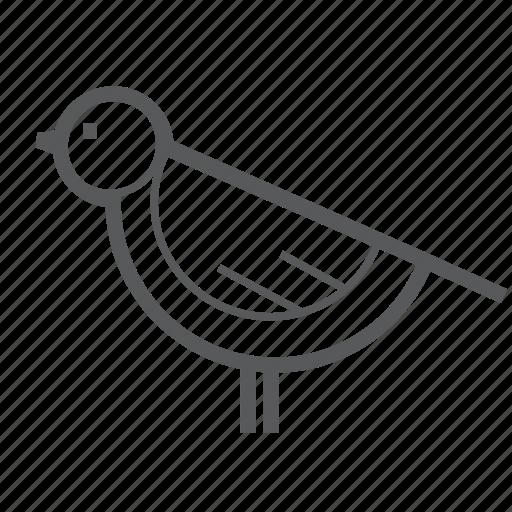 animal, animals, bird, nature, pet icon