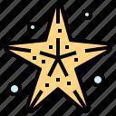 holidays, life, star, starfish
