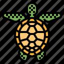 animal, life, sea, turtle, zoo