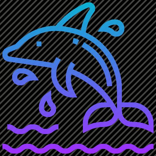animal, dolphin, fish, sea icon