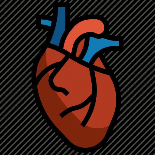 Heart, anatomy, organs, organ, body, parts icon - Download on Iconfinder