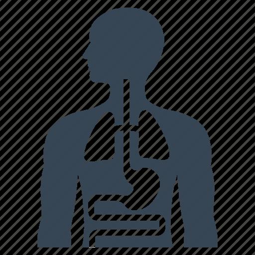 diagnosis, health care, internal medicine icon