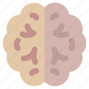 brain, human, idea, intelligence, mind