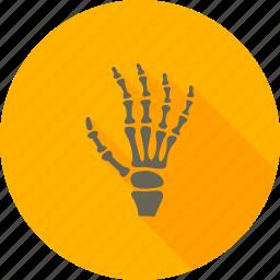 bones, examination, fingers, hand x-ray, image, radiology, skeleton icon