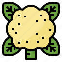 cauliflower, healthy, nutritious, vegetable icon