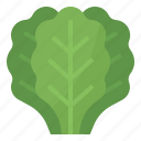 healthy, kale, nutritious, vegetable icon