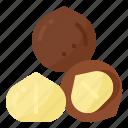 healthy, macadamia, nut, nutrition icon