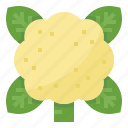 cauliflower, healthy, nutritious, vegetable