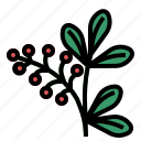 barberry, herb icon