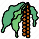blackpepper, herb icon