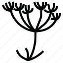 caraway, herb icon