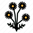 chamomile, herb icon