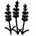herb, lavender icon