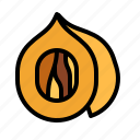 herb, nutmeg icon