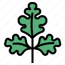 herb, parsley icon
