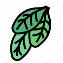 herba, spinach icon