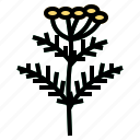 herb, tansy icon