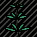 herb, tarragon icon