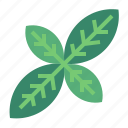 basil, herb, herbs, plant icon
