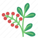 barberry, food, herb, vegetable icon