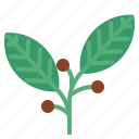 bayleaves, food, herb, vegetable icon