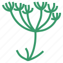 caraway, food, herb, vegetable icon