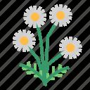 chamomile, food, herb, vegetable icon