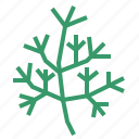 dill, food, herb, vegetable icon