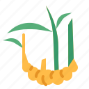 food, ginger, herb, vegetable icon