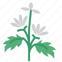 food, herb, marshmallow, vegetable icon