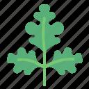 food, herb, parsley, vegetable