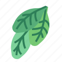 food, herba, spinach, vegetable icon