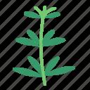 food, herb, tarragon, vegetable