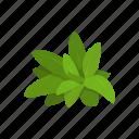 flavoring, garden sage, herbs, plant, sage, spices icon