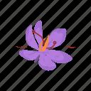 aroma, flavoring, herbs, saffron, saffron crocus, seasoning, spices icon