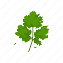 chinese parsley, cilantro, coriander, flavoring, herbs, plant, spices icon