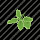 herbs, oregano, plant, seasoning, spices, sweet marjoram, wild marjoram icon