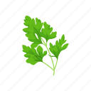 aroma, garden parsley, greens, herbs, parsley, spices, vegetable icon
