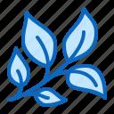 basil, herb, medicinal, plant icon