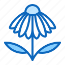 echinacea, flower, herb, medicinal, plant icon